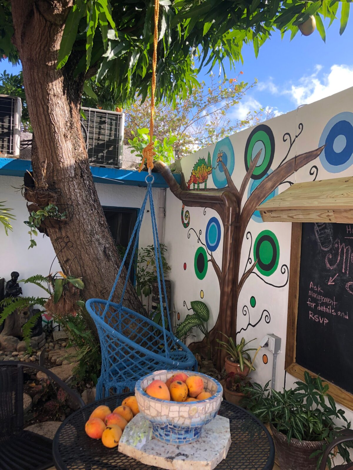 mango tree with grafiti wall